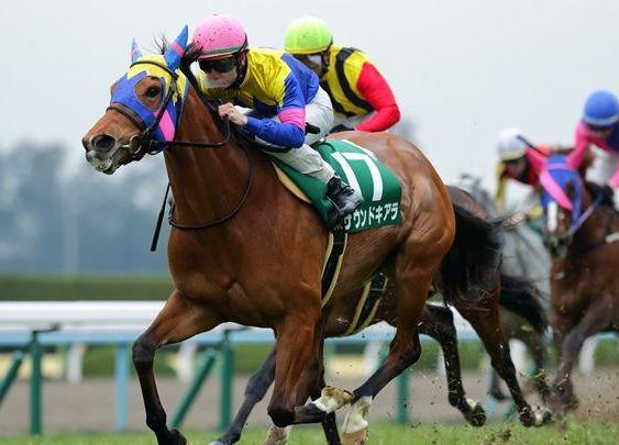 京都牝馬S/馬券の買い方